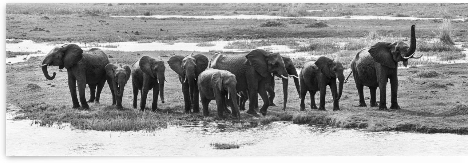 elephant 01 by Sylvain Girardot