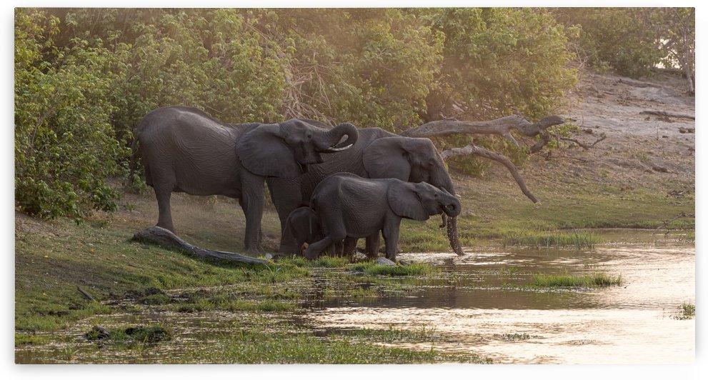 elephant 02 by Sylvain Girardot