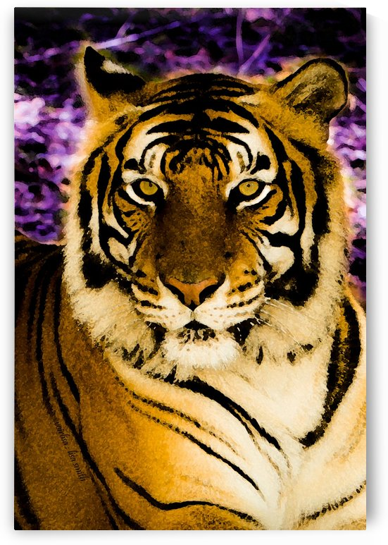 Majestic Tiger by lisa smith