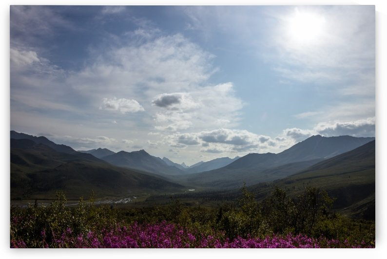 Dempster Highway   61 by Laurie Kindred
