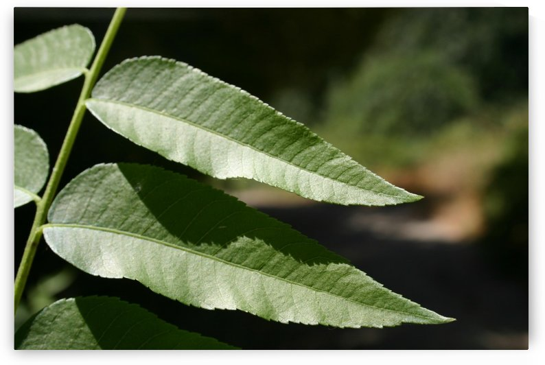 double leaf by BC Photography