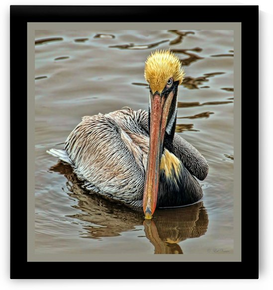 Brown Pelican - HDR by Digicam