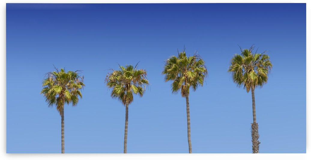 Lovely Palm Trees | Panorama by Melanie Viola