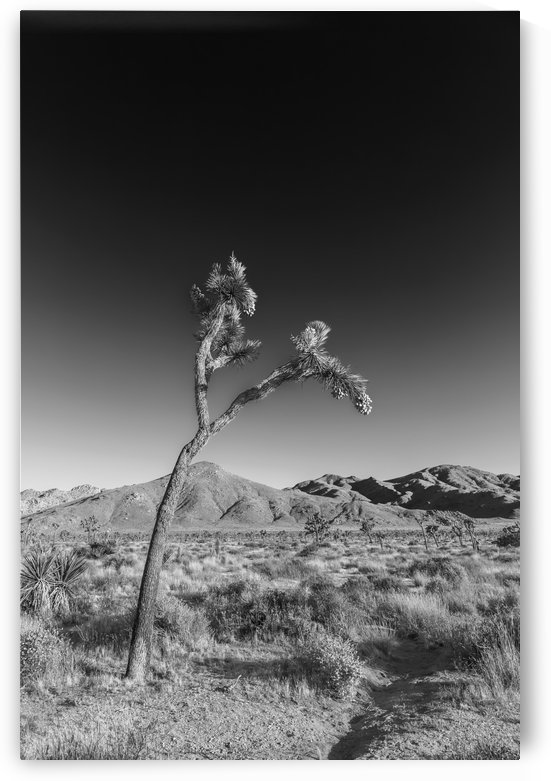 Joshua Tree National Park | Monochrome by Melanie Viola