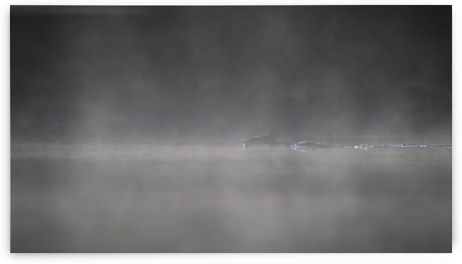 MORNING SWIM by Jocelyn Galipeau