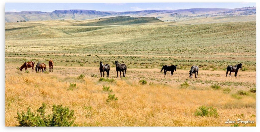 Horses by Liam Douglass