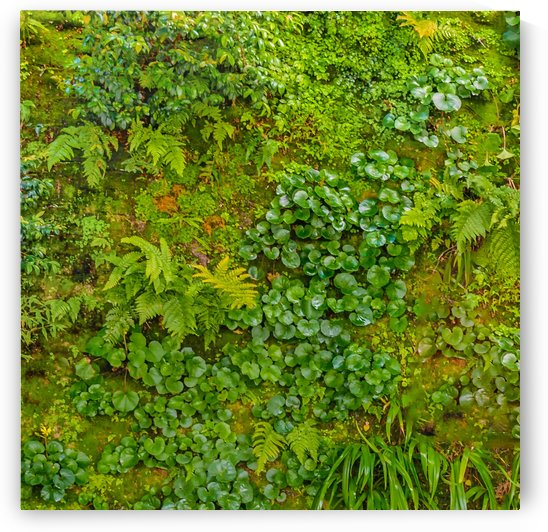 Vivid Nature Texture Background by Daniel Ferreia Leites Ciccarino