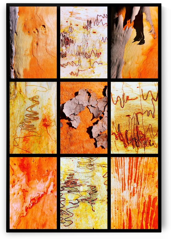 Salmon and Scribbly Gum Tree Bark by Lexa Harpell