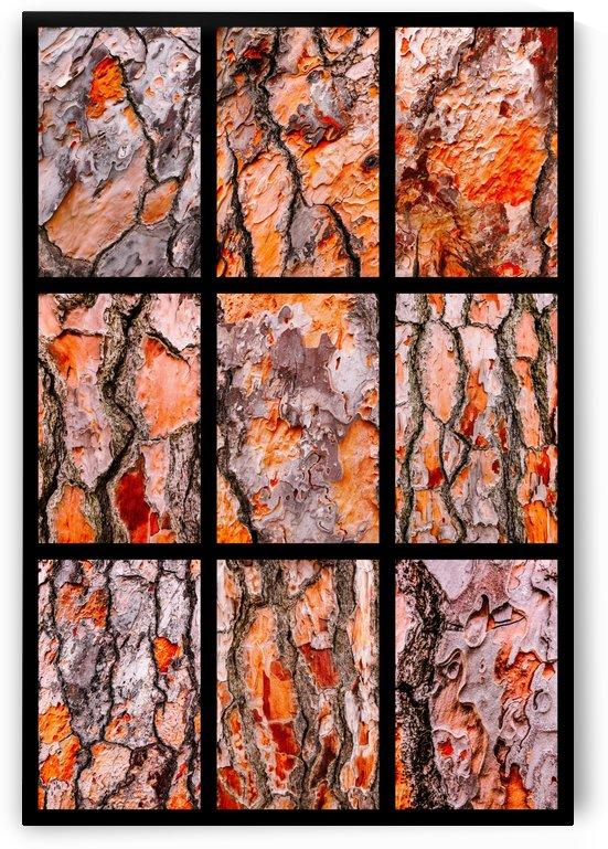 Pine Bark Montage - portrait by Lexa Harpell
