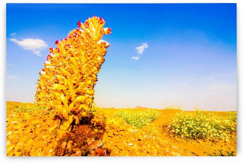 Fleur du désert by agencetourdumonde com