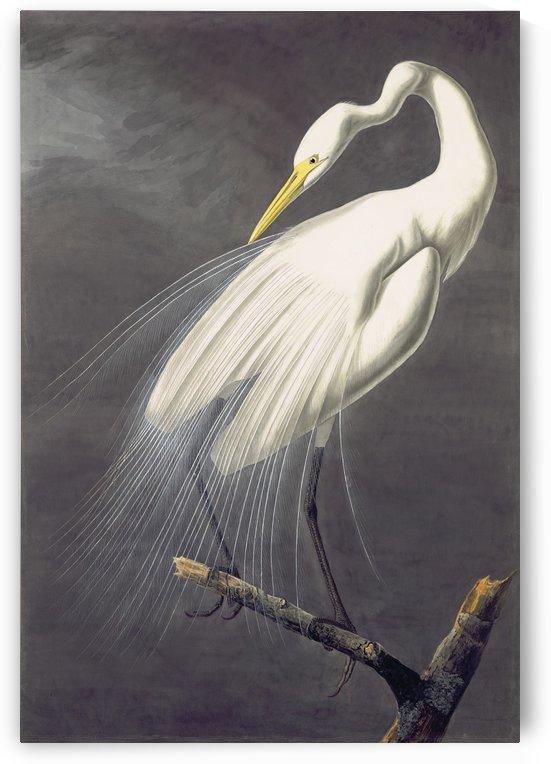 Keep your eye open by John James Audubon