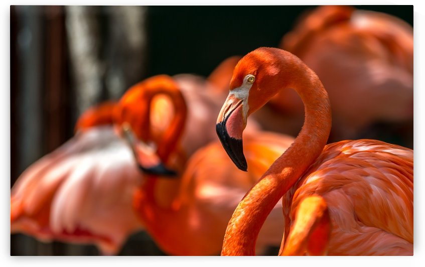 flamingo family by George Bloise