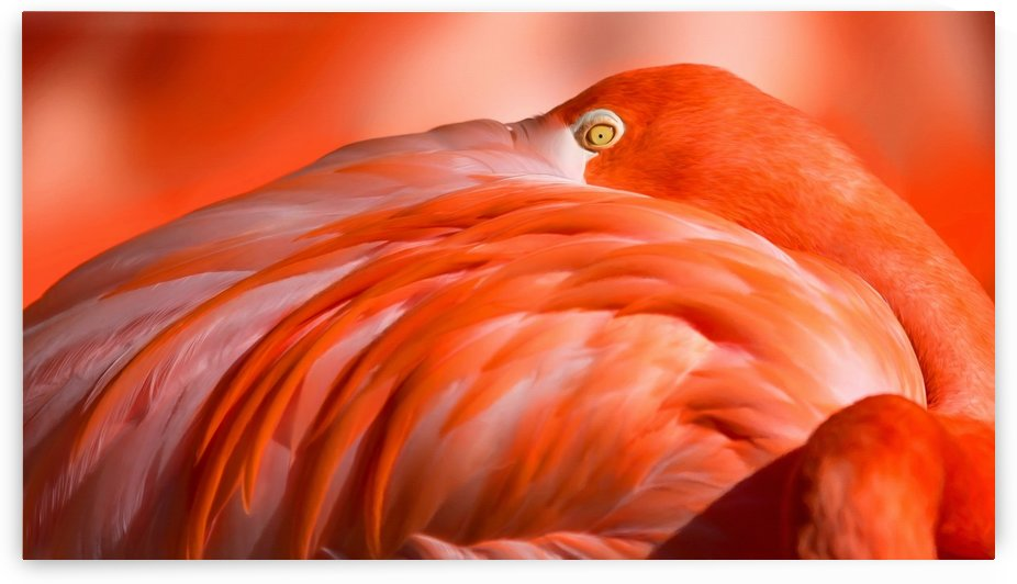 Flamingo Eye by George Bloise