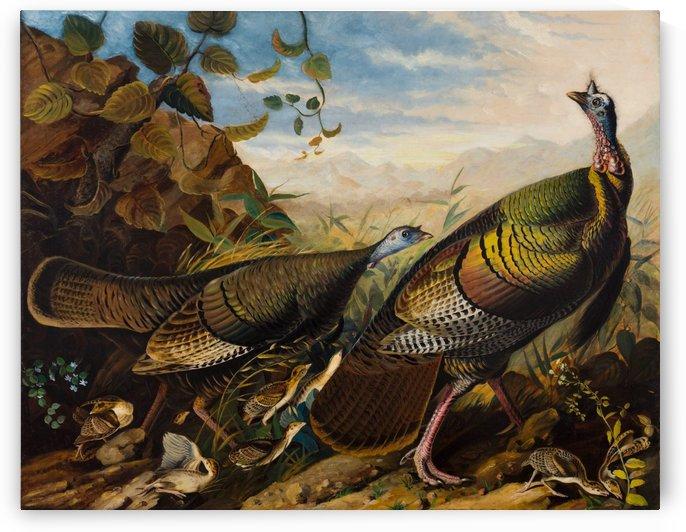 Wild Turkeys by John James Audubon