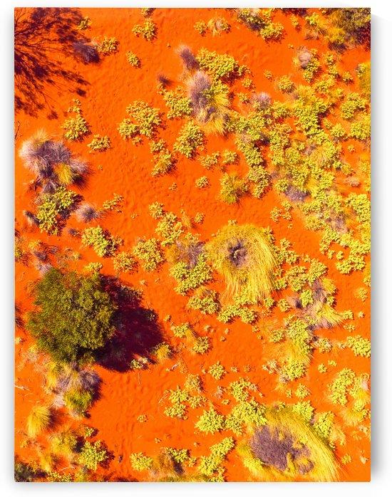 Dunes Aerial  - Central Australia by Lexa Harpell