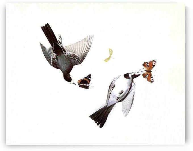 Wagtails by John James Audubon
