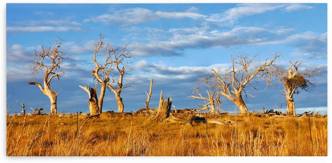 Beautiful Bare Trees 2 by Lexa Harpell
