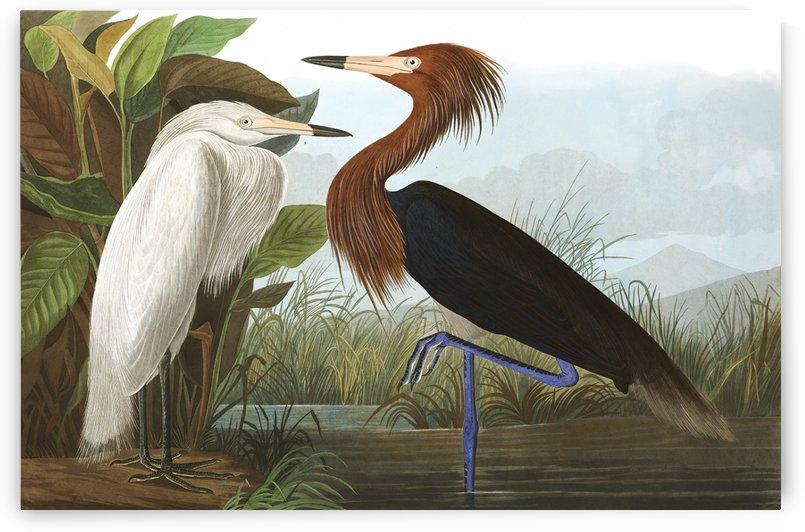Perfect union by John James Audubon