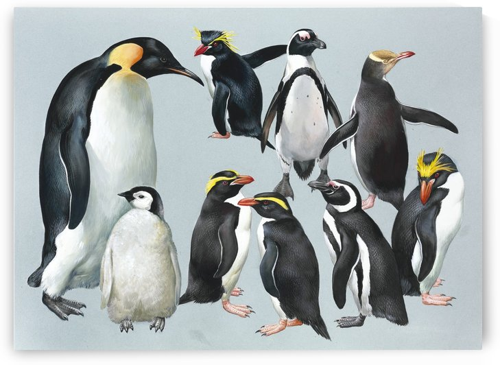 Penguins by John James Audubon