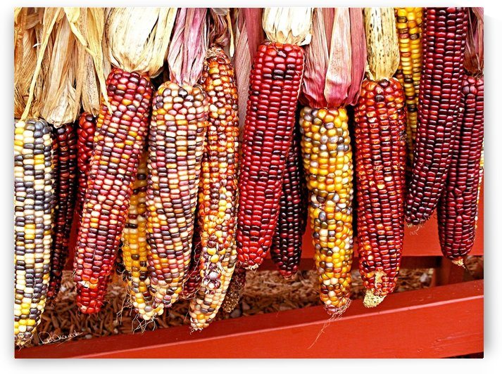 Red Autumn Corn by Peter Horrocks