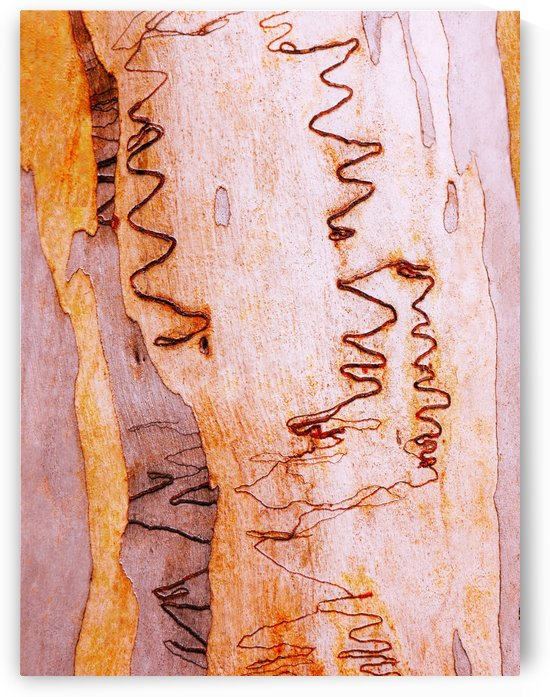 Scribbly Gum Bark by Lexa Harpell