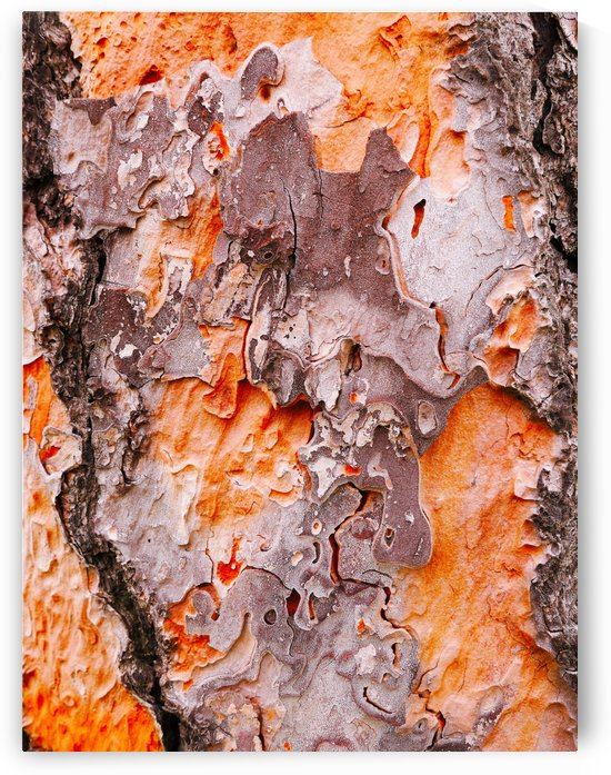 Pine Tree Bark by Lexa Harpell