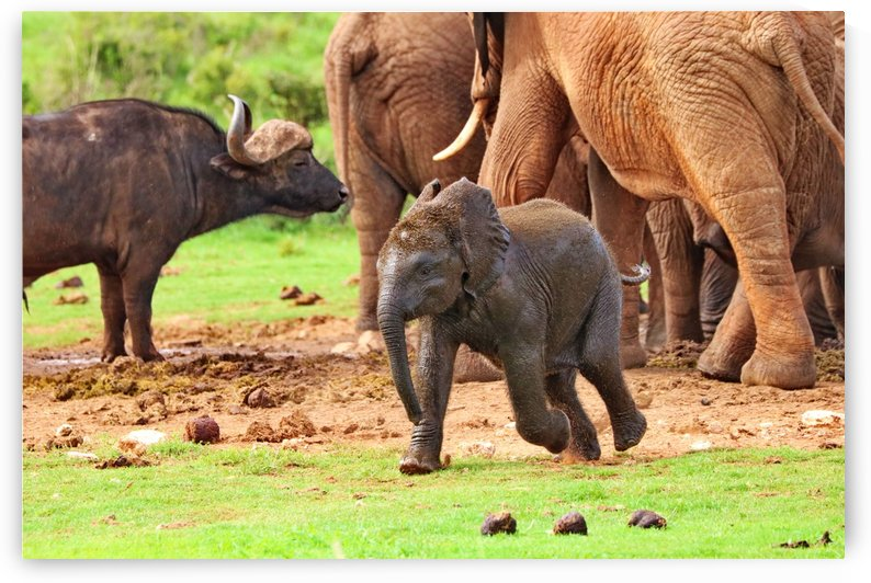 Elephant Baby 582 by Thula-Photography
