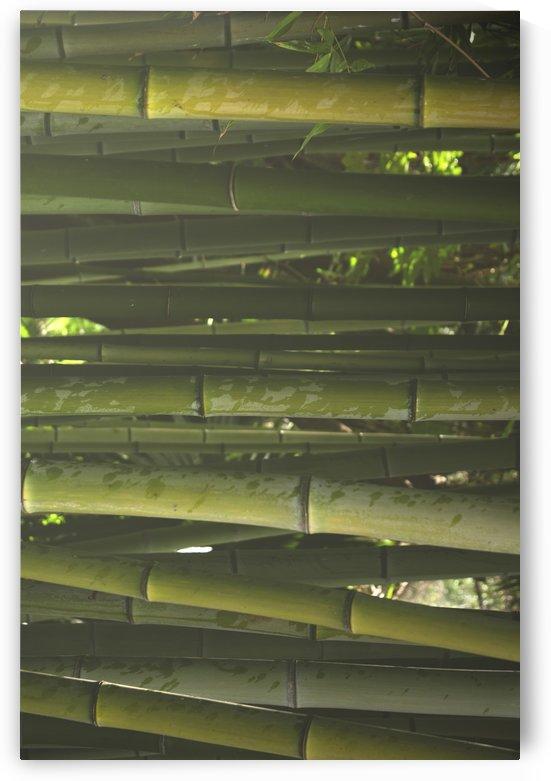Through the bamboo by Filipa Sara Popova