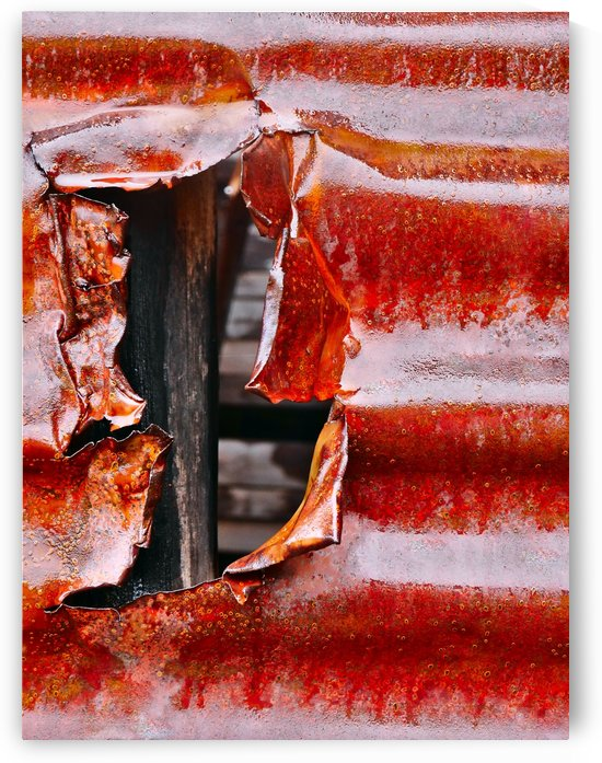 Corrugated Iron Series 12 by Lexa Harpell