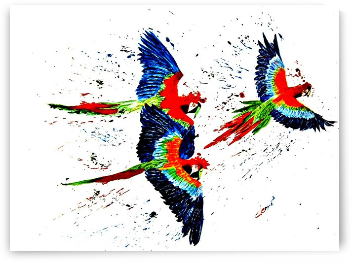 AO - Three Parrots by Clement Tsang