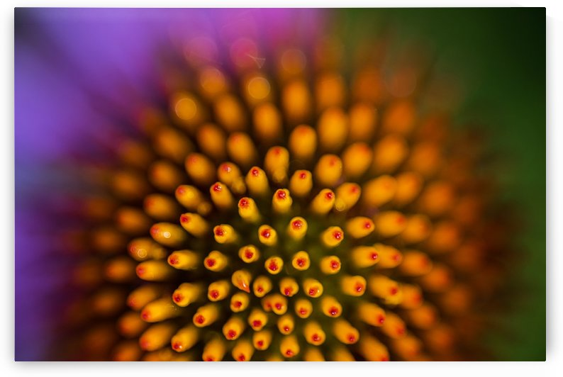 Flower Abstract by Lily Markovic