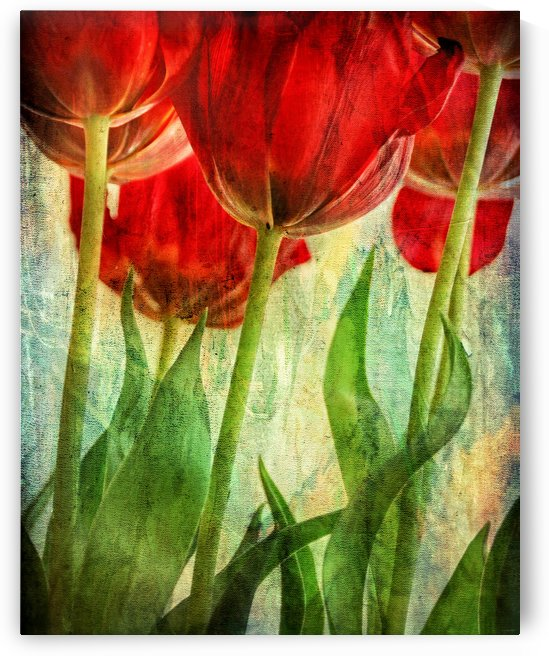 Tulips by Lily Markovic