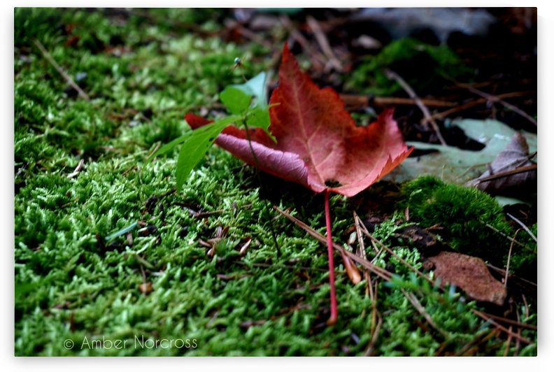 First sign of Fall by Amber Norcross
