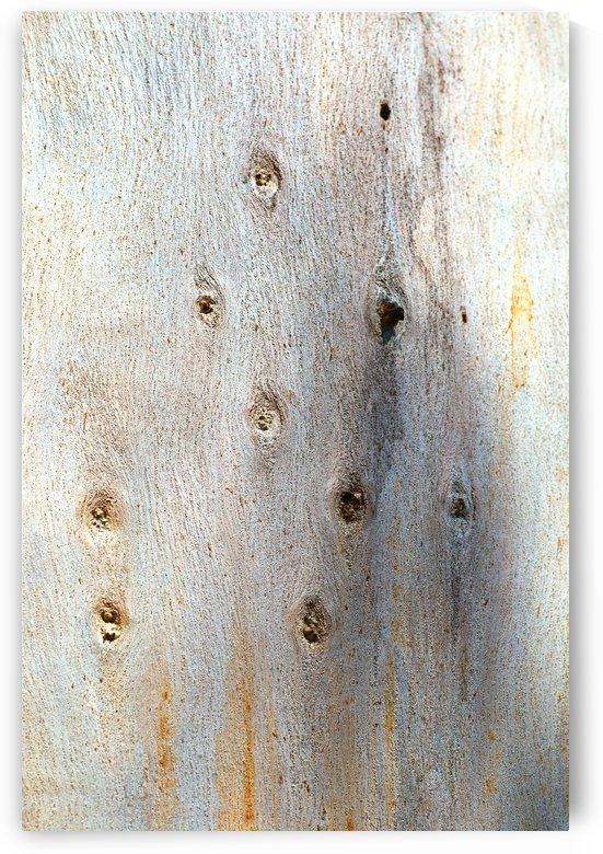 Eucalyptus Trunk Knots by Joy Watson