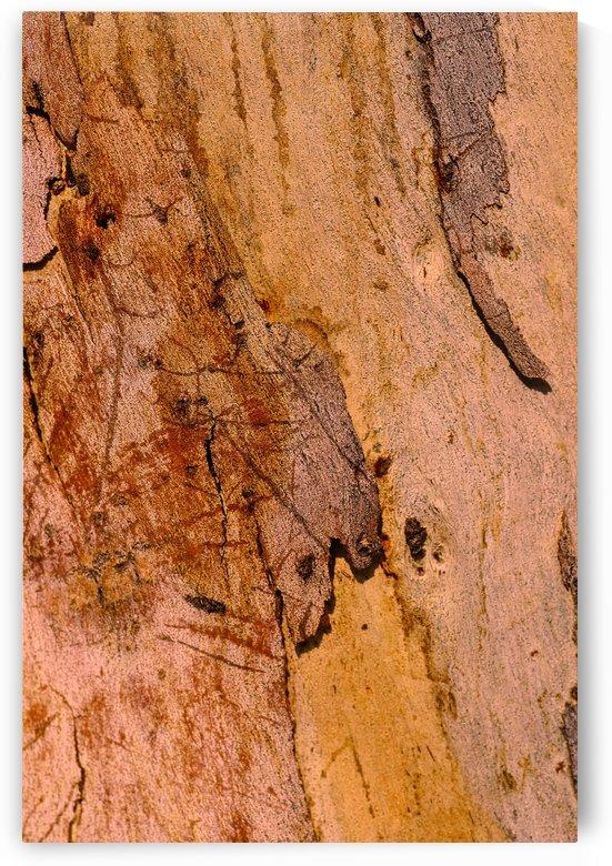 Bark Art Of Gum Tree by Joy Watson