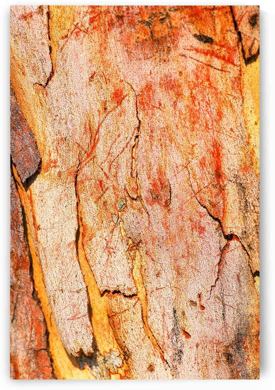 Eucalyptus Bark And Patterns by Joy Watson