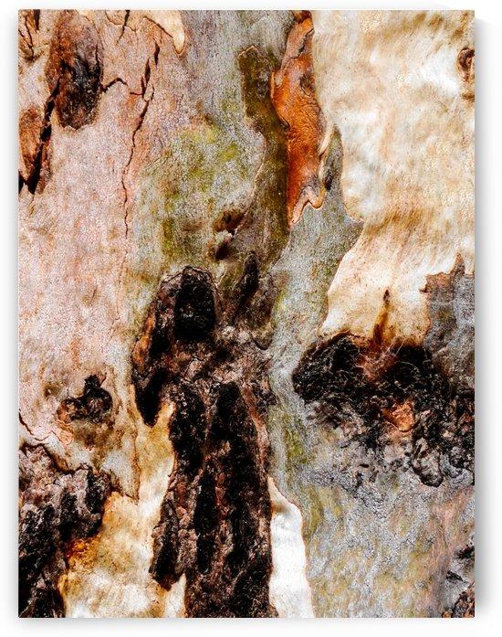 Ghost Gum Bark - 3 by Lexa Harpell