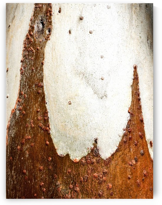 Ghost Gum Bark - 2 by Lexa Harpell