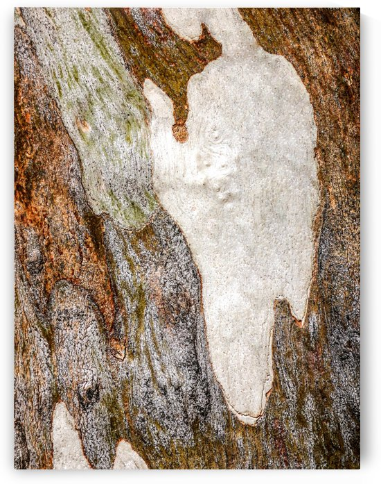 Ghost Gum Bark - 5 by Lexa Harpell