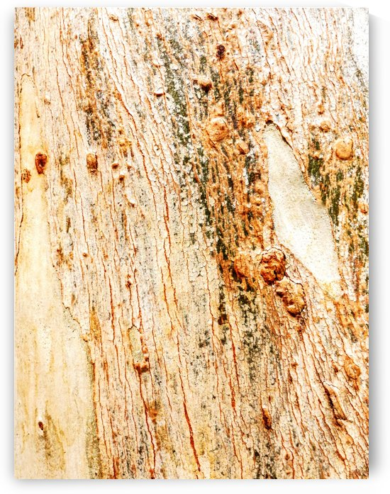 Aussie Gum Tree Bark - 1 by Lexa Harpell