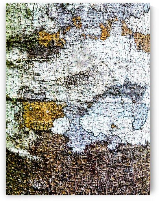 Aussie Gum Tree Bark - 2 by Lexa Harpell