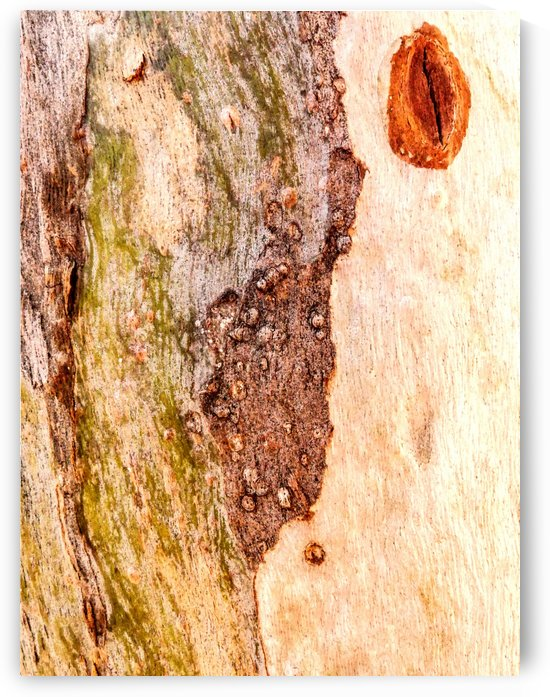 Aussie Gum Tree Bark - 3 by Lexa Harpell