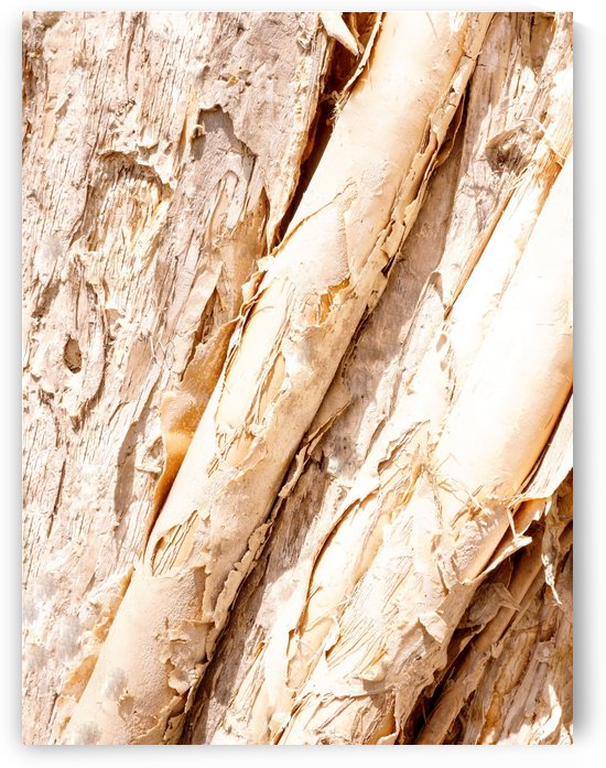 Aussie Gum Tree Bark - 7 by Lexa Harpell