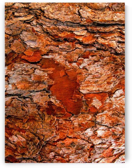 Aussie Gum Tree Bark - 6 by Lexa Harpell