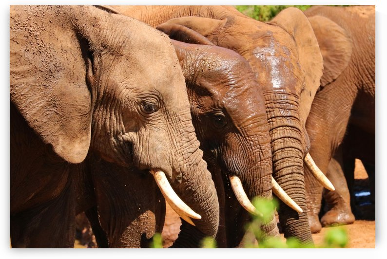 Elephants Meeting 401 by Thula-Photography