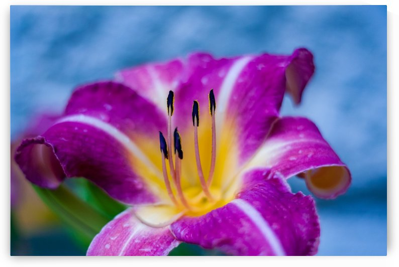 Flowers_ by Tiffany Ross