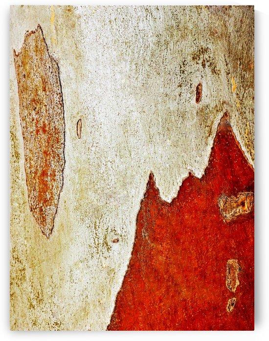 Murray Gum Tree Bark 1 by Lexa Harpell