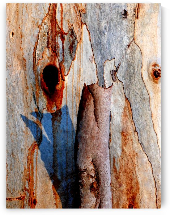 Murray Gum Tree Bark 5 by Lexa Harpell