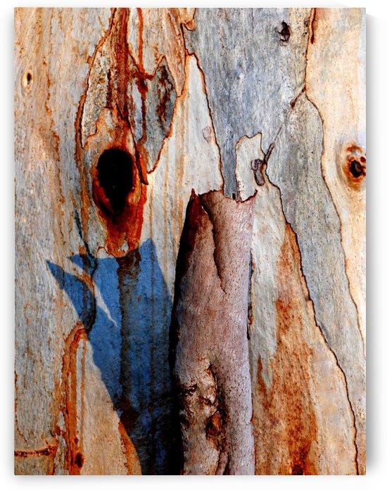 Murray Gum Tree Bark 5 by Lexa Harpell