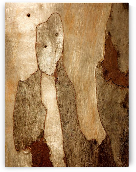 Murray Gum Tree Bark 6 by Lexa Harpell